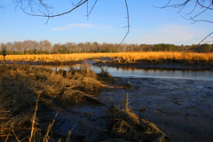 Lewes Wetlands (Cheryl Atkins) Tags: naturethroughthelens wetlandslewes delawarewatergrassesskyreflectiongoldenlight