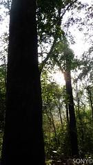 P1090055 copy (SONY CHACKO) Tags: ponmudi kallar meenmuttiwaterfalls