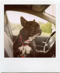 (Leah Reich) Tags: marin bolinas slr680 copilot deadslow theoneandonly 779 adventureswith missjaniesparkles