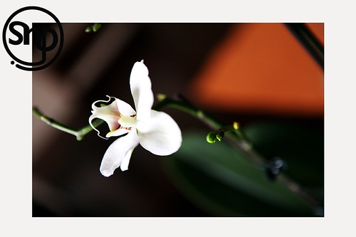 2 . orchid .