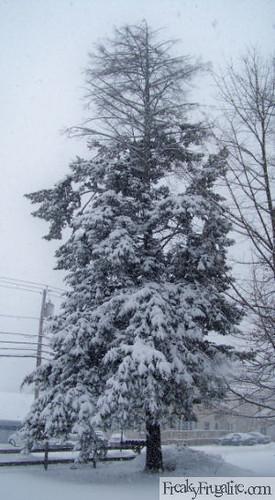Feb Snow 1