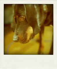 retro-hound2