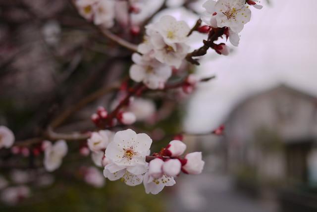 住宅街の春
