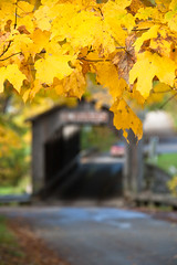 Fall 2009 (Kathy~) Tags: show autumn fall leaves yellow leaf dof michigan coveredbridge upnorth fc herowinner ultraherowinner fromyour1stpage