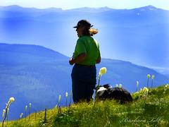 The Hills Are Alive (misst.shs) Tags: dog canada mountains nikon montana hiking idaho bordercollie lupine beargrass