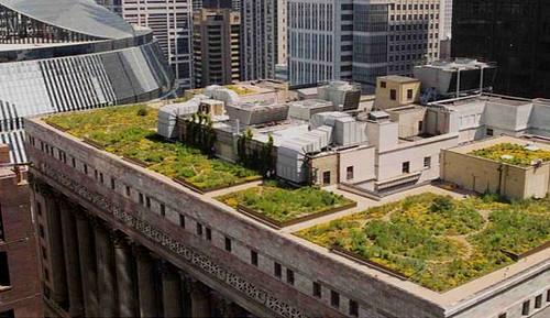 Chicago Y Venezuela En Su Plan Ecologico De Siembra De