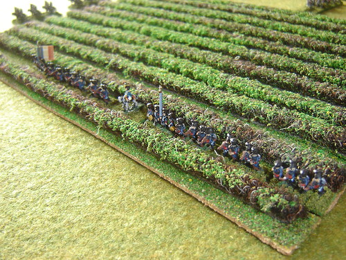 Light Infantry in vineyards