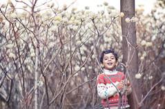 SAIF (irfan cheema...) Tags: china flowers pakistan spring shanghai saif irfancheema