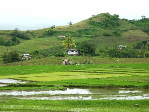 Negros-San Carlos-Bacolod (68)