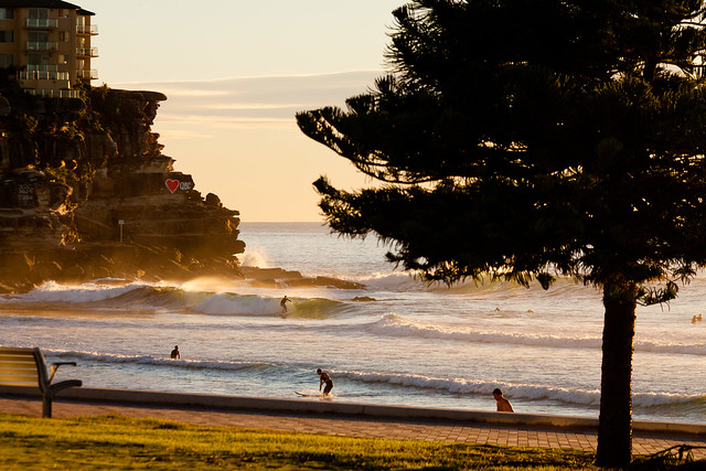 Manly Morning Surf