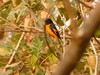 P1150509 (babsybou) Tags: travel india birds silent watching kerala du valley yatra sud inde attapadi birdswatching babsybou malleeshwaramjunglelodge pettickal
