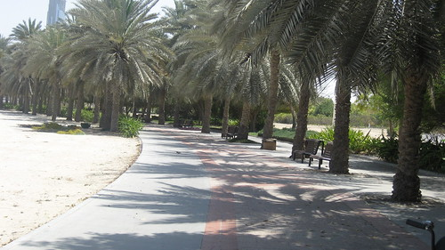 Palm-Lined Path Near Dubai Creek Park