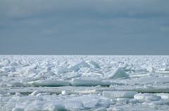 Rsij. (Jaan Keinaste) Tags: sea ice nature estonia pentax meri eesti loodus j k7 hummocks suurupi hummockyice