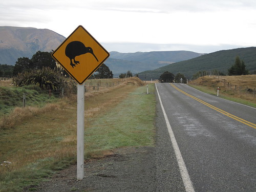 Kiwi crossing, I hope