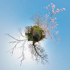 As a feather ~ Explored (edwardhorsford) Tags: park panorama tree london grass ball cherry little blossom path panoramic tennis planet stitched regents stereographic hugin