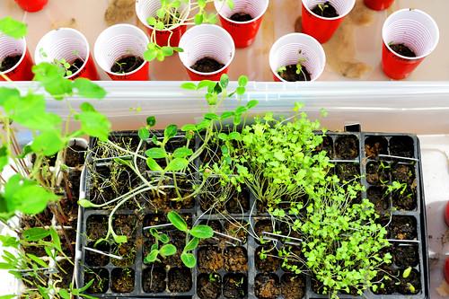 planting2011_3