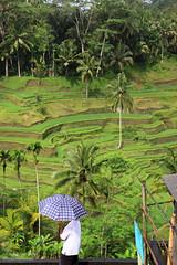 Terraced Rice Fields of Bali (mikel.hendriks) Tags: travel bali indonesia landscape vakantie photo foto ricefield ricefields indonesi riceterraces landschap riceterrace rijstvelden gunungkawi rijstterrassen canoneos50d terracedricefields rijstterras sigma1770mmf284dcmacrooshsm rijstterrasvelden