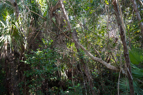 Everglades-2