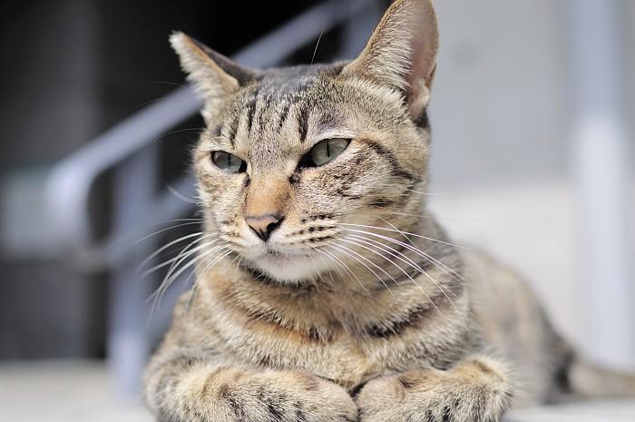 ntut-cat-debut