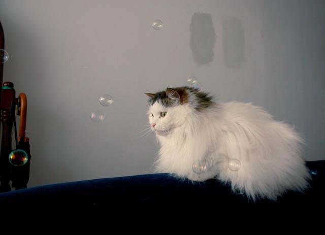 lou lou bubbles i