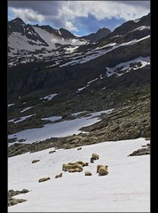 The Ltschen Pass  in summer time . Ships on the snow. (Izakigur) Tags: mountains liberty schweiz switzerland nikon europa europe flickr suisse suiza swiss feel unesco kandersteg d200 alpen helvetia svizzera alpi lepetitprince ch musictomyeyes  suizo  myswitzerland lasuisse nikond200 nikkor1755f28 alpene lotschental  alperne ltschepass izakigur vanagram suisia jungfraue laventuresuisse izakigur2009 izakiguralps izakigurberne  rememberthatmomentlevel1