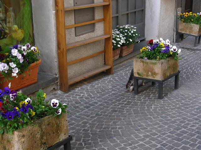 花壇と植木鉢のフリー写真素材