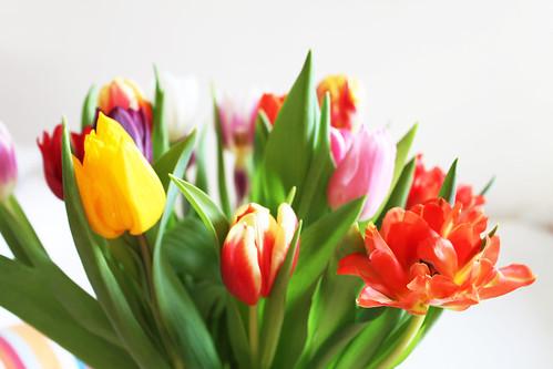 Frühlingstulpen im Februar