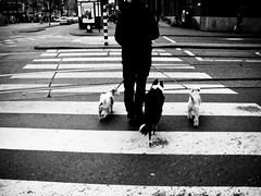 Amsterdam 2011 (Rtger) Tags: street 3 dogs amsterdam photography crossing zebra