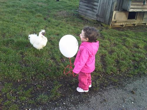 Midget v Chicken