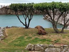 1568 Santander La Magdalena (carlocorv1) Tags: mare natura piante animali
