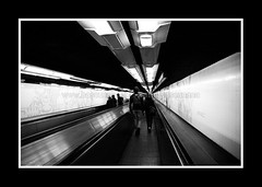 PARIS FEVRIER 2011-8514 (David Bascunana) Tags: paris cadenas palaisdejustice metro crane louvre pigeon alma pigeons coeur os muse notredame pont metropolitain arcdetriomphe sdf panam escalier greve gargouille mairie parvis pontneuf manifestation ilestlouis rer clochard chatelet catacombes bateaumouche marceau pontdesarts tapisroulant clodo paname ossements procs sansdomicile champslyse sansdomicilefixe outreau contrepoint ilesaintlouisiledelacit