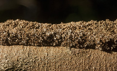 termites build mud tunnels