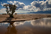 Salton Sea (cins_city) Tags: california tree desert shoreline northshore saltonsea