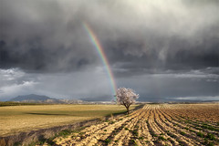 One Storm, Two Rainbows and Almond Tree (DavidFrutos) Tags: storm arcoiris clouds landscape rainbow paisaje murcia nubes nd tormenta rainbows canondslr gnd canon1740mm davidfrutos 5dmarkii saariysqualitypictures theacademytreealley cagitndemula