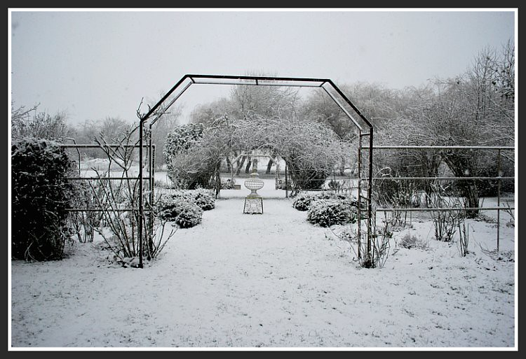 Rose Garden in the Snow