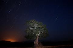 (Winning Days !) Tags: chile de y amanecer estrellas árbol sur frio exposiciones cagado largas mediahora