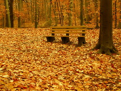 Blending in with autumn (NataThe3) Tags: park autumn fall nature leaves bench leaf colorful niceshot seasons mygearandme