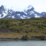 Pehoe Lake view of a guanaco and mountains