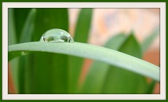 Gota de Agua (Alberto Jiménez Rey) Tags: macro verde green water de agua alberto manuel rey hierba jimenez albjr