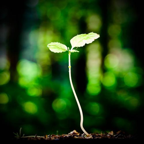 フリー写真素材, 花・植物, 植物(その他), 芽,