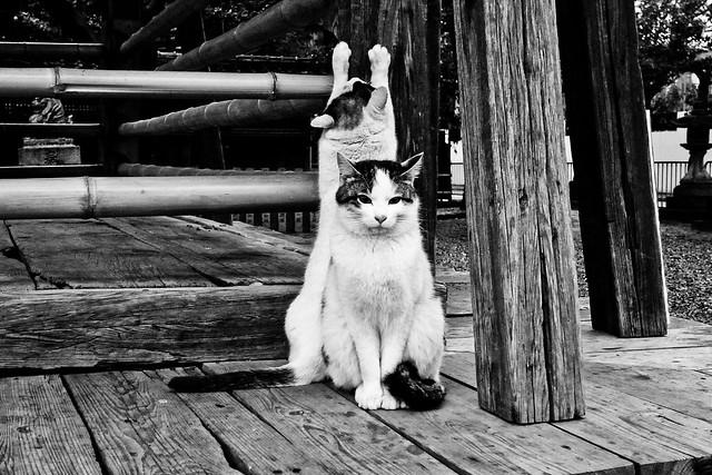 Today's Cat@2011-03-07