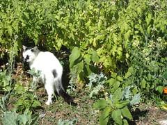 predator in the garden