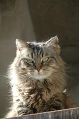 Vi guardo.... (virgiliomulas.) Tags: grey alto altezza pericolo amica gatta guardare umani neutrale periodo capire ammirare ostili catnipaddicts virgiliocompany vg~catsgallery