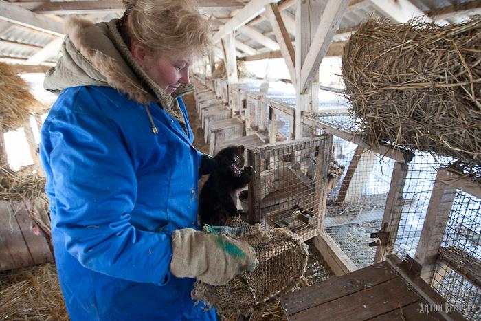 Разведение животных как бизнес в домашних условиях 308