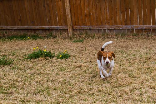 Puppy Pack-004.jpg