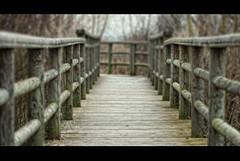 The path. (Palentino) Tags: wood way madera dof camino path walk perspective lagoon perspectiva laguna nava deepoffield andar palencia profundidaddecampo fuentesdenava
