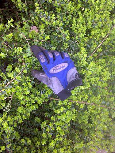 bushy n london 1000 110315 by MollsMusings