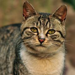大眼睛 Big Eyes (SimonQ錫濛譙) Tags: cat shanghai 上海 貓 2011 延中绿地 afsvr105mmf28gifed nikkor105mmf28gvrmicro 延中綠地