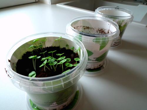 IKEA herbs