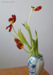 This is the end, my friend.... (Aelitha) Tags: stilllife flower canon tulip vase softfocus highkey filmgrain withering